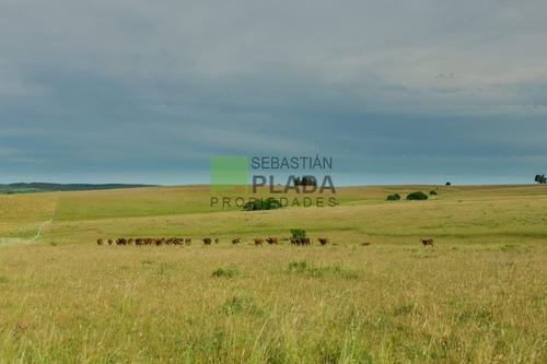 Muy Buen Campo Agrícola Ganadero A 28 Kms. De San Carlos- Ref: 280