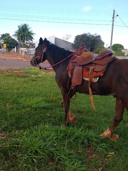Cavalo Marchador