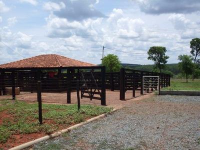 Fazenda 277 Hectares Caetanópolis (mg) - Cod: Mta1042