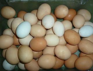 Huevos Caseros 2docenas