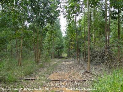 Área Rural Para Venda Em Guaíba, Estrada Municipal De Mariana Pimentel - 5006