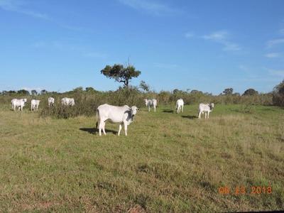 Fazenda A Venda Em Jardim - Ms (pecuária) - 884
