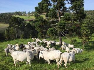 Fazenda Para Venda Em Ortigueira, Zona Rural - 1102_2-901923