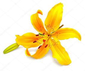 5 Mudas Lírio Amarelo Hemerocallis Flava - Frete Grátis