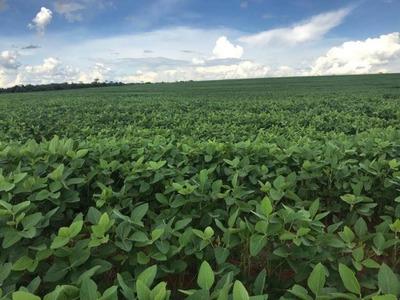 Fazenda A Venda Em Iguatemi -ms (dupla Aptidão) - 1102