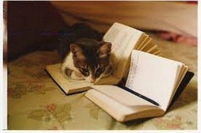 Lote 20 Livros Literatura Estrangeira Para Sebos E Bibliotec