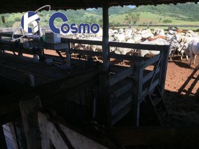 Fazenda, A Venda, Em Marília - Sp - **oportunidade** - Fa00068 - 33518513