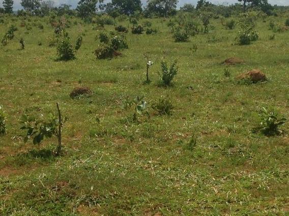 Fazenda A Venda Em Planalto Da Serra -mt (dupla Aptidão) - 743