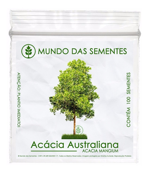 100 Sementes Acacia Mangium Australiana + Frete Grátis