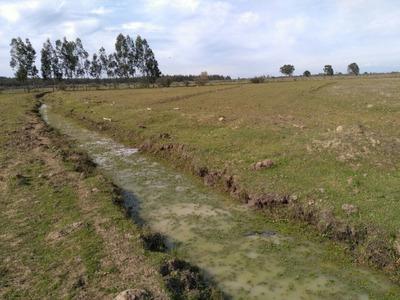 Parcela Agricola 4 Has. Con Riego, Comuna De Ñiquen.