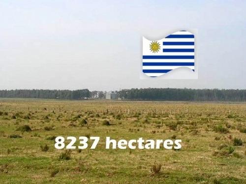 Fazenda Com 8.237 Hectares Em Treinta Y Tres - Uruguai