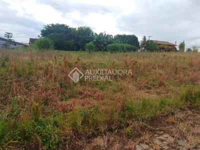 Terreno - Linha Forqueta (distrito) - Ref: 288198 - V-288198