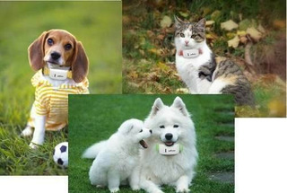 Gps Mascotas Perros Gatos Ubicalos