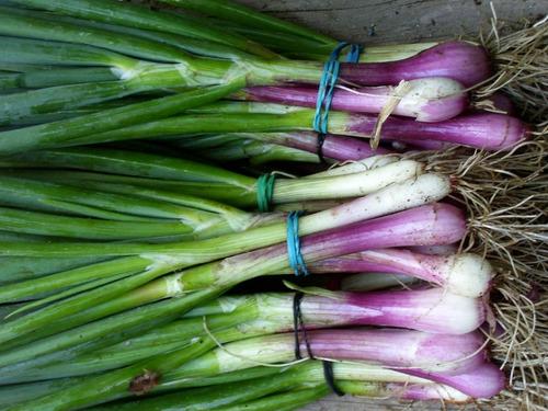 Imagen 1 de 4 de Semillas De Cebolla De Verdeo Colorada