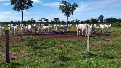 Fazenda A Venda Em Aquidauana - Ms (pecuária) - 816
