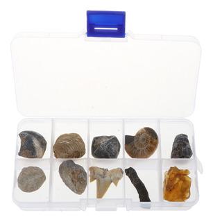 Caja De 10pcs Colección De Fósiles Naturales De Rocas