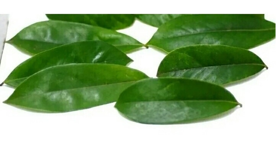 Hojas De Guanabana Medicina Natural Organica 100 Hojas