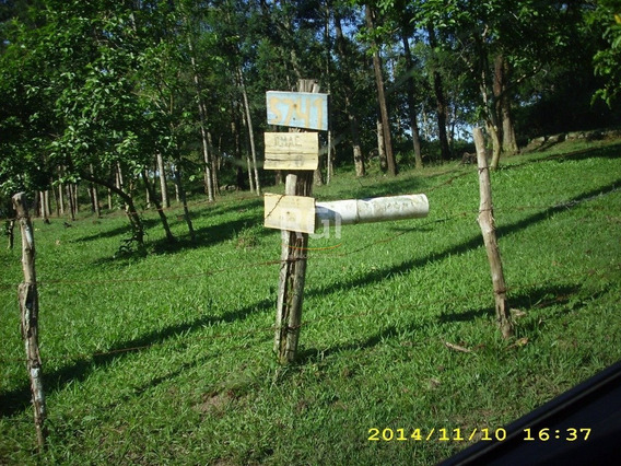 Terreno Em Lomba Do Pinheiro - Li50876725
