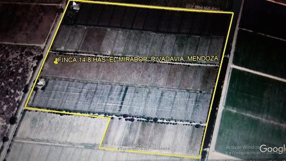 Finca 14.82 Has, El Mirador, Rivadavia, Mendoza