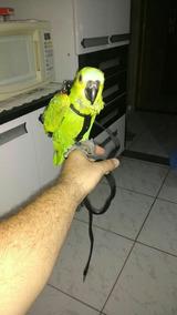 Peitoral Para Papagaio Com Guia Frete 12,00
