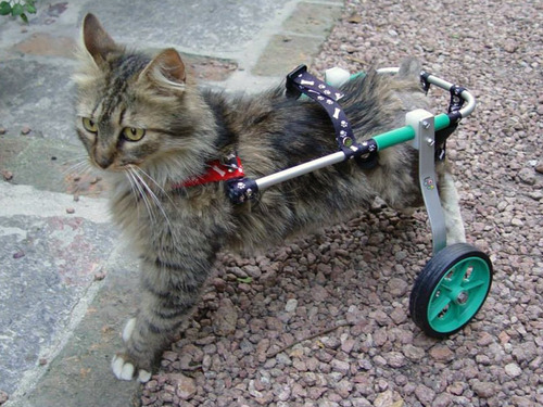 Carrito O Silla De Ruedas Para Gatos Con Discapacidad