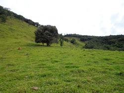 Fazenda Em Baependi Sul De Minas Com 113,64 Ha Toda Formada - 01 Casa- Curral E Boa De Água. - 2944