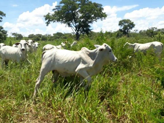 Fazenda Para Venda Em Bodoquena, Zona Rural - 1079