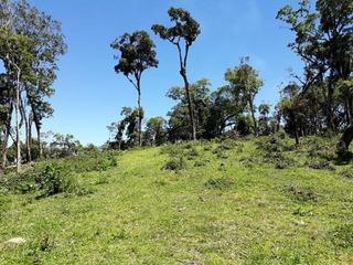 Terreno No Tijucume Com 0 Quartos Para Venda, 30000 M² - Kt309