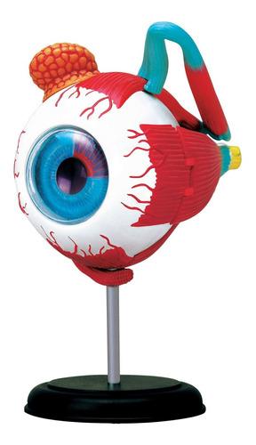 Modelo Corpo Humano - Globo Ocular / Olho - 4d Master