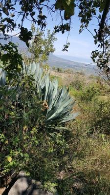 Terreno En Tapalpa