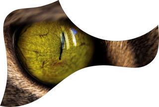 Escudo Palheteira Resinada Violão Aço Estilo Taylor Cat Eye
