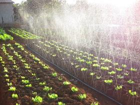 Mangueira Irrigação Microperfurada A Laser Santeno 1 - 100m
