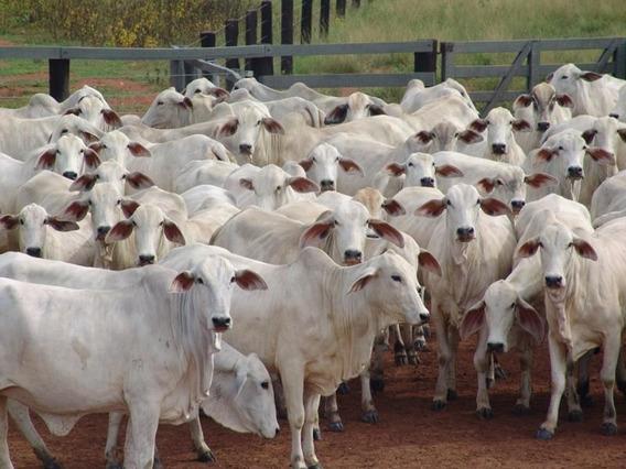 Fazenda Para Venda Em Corumbá, Região Do Rabicho - Fa0009