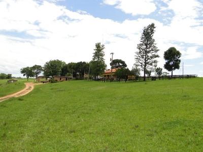 Fazenda A Venda Em Ribas Do Rio Pardo - Ms (pecuária) - 958
