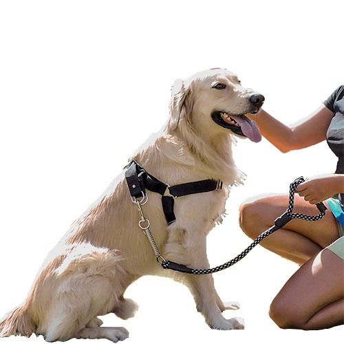 Coleira Peitoral E Guia E Brinde Adaptador Cinto Labrador