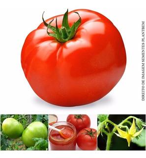 Sementes De Tomate Carmem Longa Vida Original Para Mudas Considerado Um Dos Mais Raro Saboroso E Exótico Do Mundo