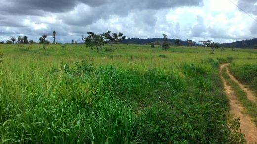 Vendo Troco Fazenda 847 Hec Em Novo Progresso-pa (4140)