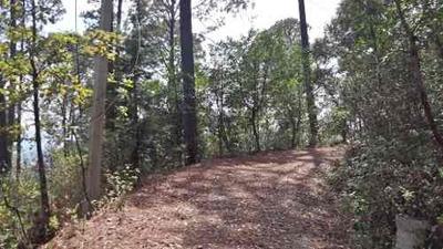 Bosque De San Simón