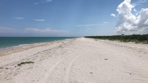 Terreno Frente A La Playa De Celestún