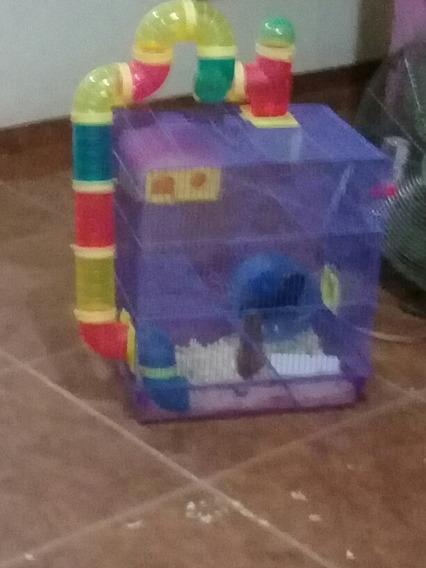 Gaiola De Hamster Com Casal