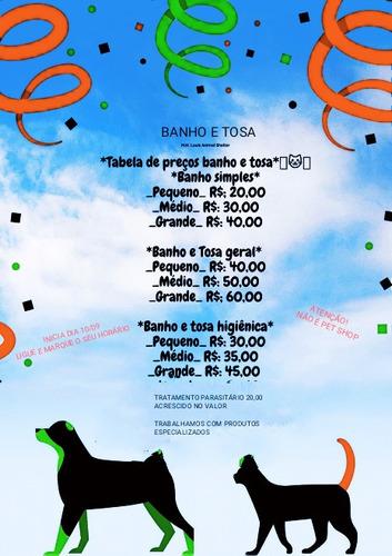 Imagem 1 de 1 de Banho E Tosa Contato: (82) 99654-0405 Feira Grande