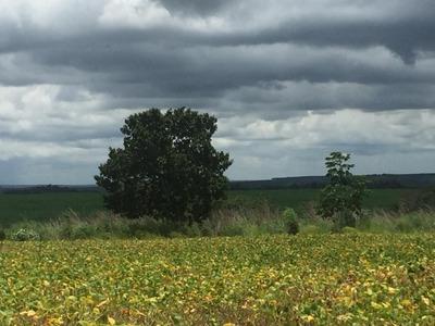 Fazenda A Venda Em Goiatins - To ( Soja, 8.000 Hectares ) - 672