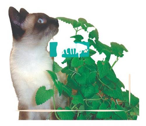 Imagem 1 de 10 de Frete Grátis + 100 Sementes De Catnip Erva Dos Gatos Nepeta