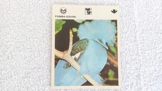 Coleção Mil Bichos Pássaro Pomba Goura De 1978