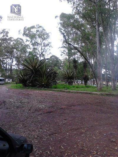 Terreno À Venda, 40450 M² Por R$ 30.000.000 - Alvarenga - São Bernardo Do Campo/sp - Te0264
