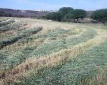 Vendo Terreno En El Blanco Municipio De Colon Qro.