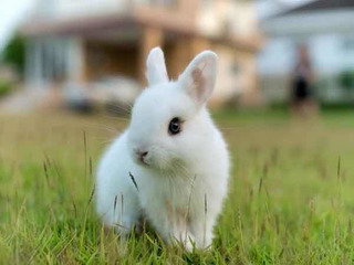 Conejos Enanos Super Dociles