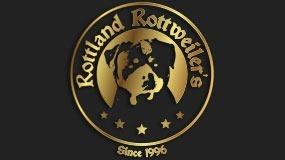 Rottweiler Alto Padrão É No Canil Rottland. N.1 Centro-oeste