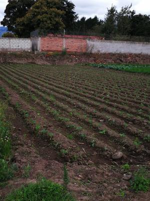 Vendo Terreno En Izamba Sector Colegio Atenas Tungurahua