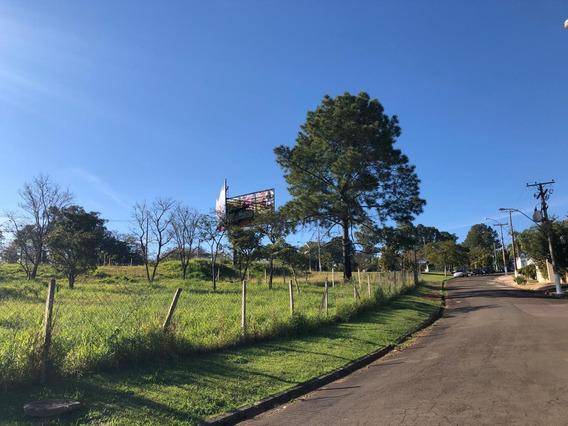 Terreno Á Venda E Para Aluguel Em Bairro Das Palmeiras - Te000914